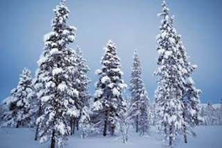 Christmas Snowfall on Tree Wallpaper For Desktop