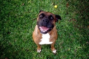 dog health, dog lovers