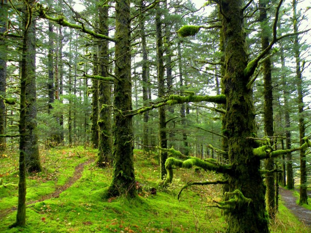 http://4.bp.blogspot.com/__kKJf8B9xwU/TNQ2-i0aXFI/AAAAAAAABek/T33hCSUG9iA/s1600/Mossy_Forest_1600-x-1200-1024x768.jpg