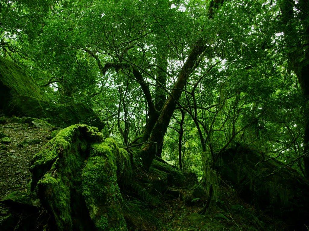 Pozadina za vaš desktop - Page 5 Zelena-suma-download-besplatne-pozadine-prirode-za-desktop-slike-priroda