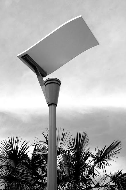 LIGHT IN PALM