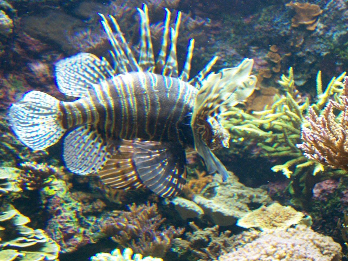 Caty et ses photos petit aquarium mais gros poissons for Gros poisson aquarium