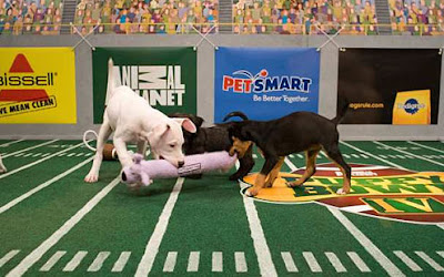 puppy bowl