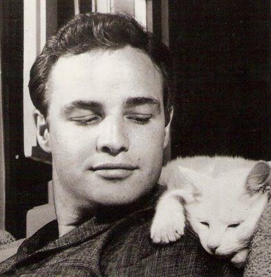 marlon brando cat