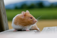 Hamster Havoc