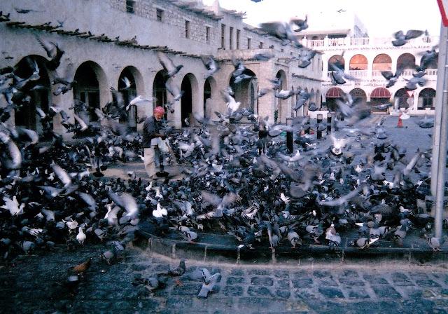 pigeons in doha qatar souq waqif