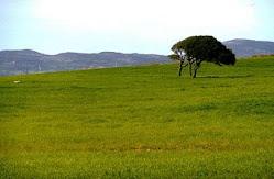 L'altre plana de conreu a Nurra, nord de l'illa