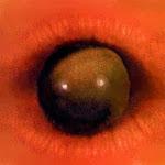 Tô de olho