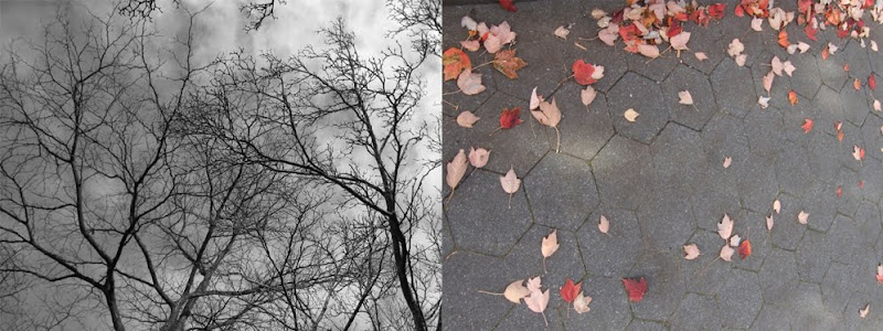 bare trees, leaves on ground