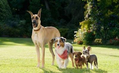 Marmaduke e seus amigos