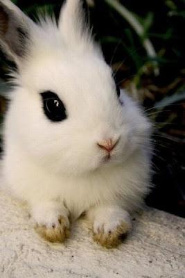 Декоративный белый кролик фото. Красивый новогодний кролик картинка. Декоративный кролик милое животное. Домашние любимцы кролики.