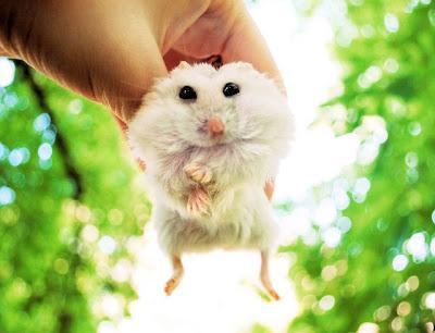 Милые животные. Белый мышонок фото прикол. Глупый белый мышонок в руке человека. Забавные картинки животных. Фото креатив.