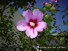 Mas flores de mi casa en Entre Ríos