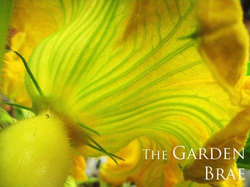 [gardenbrae2]