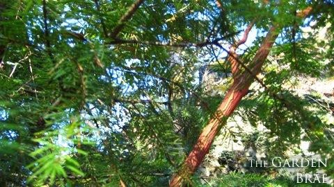 [gardenbraea12]