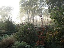 A misty Autumn shot of our garden
