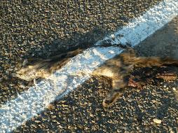 Road Kill in Idaho