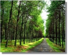 Yo soy el camino, y la verdad, y la vida; nadie viene al Padre, sino por mí.