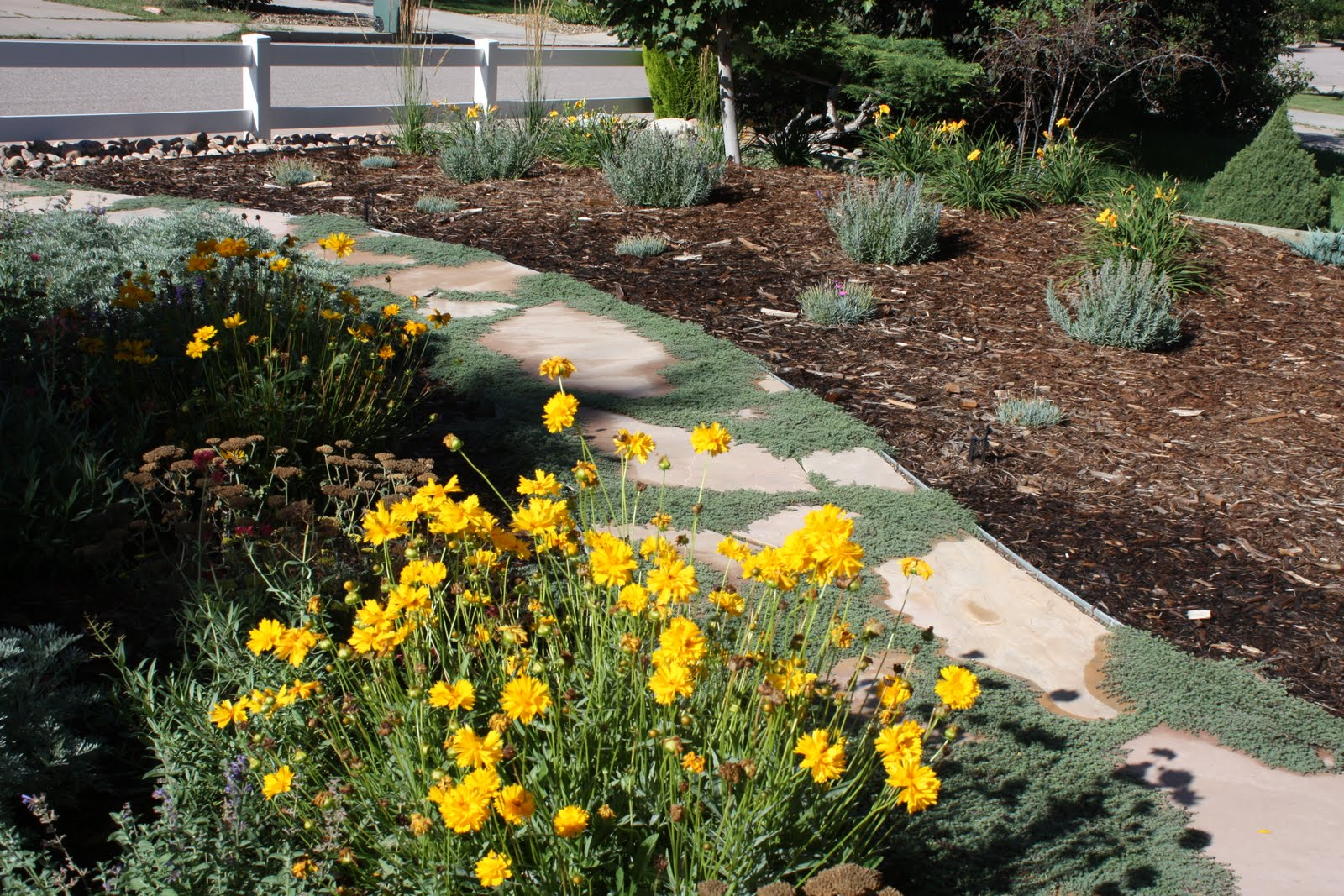 All the dirt on gardening can you say xeriscape for Xeriscape images