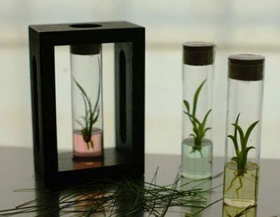 In vitro plant culture