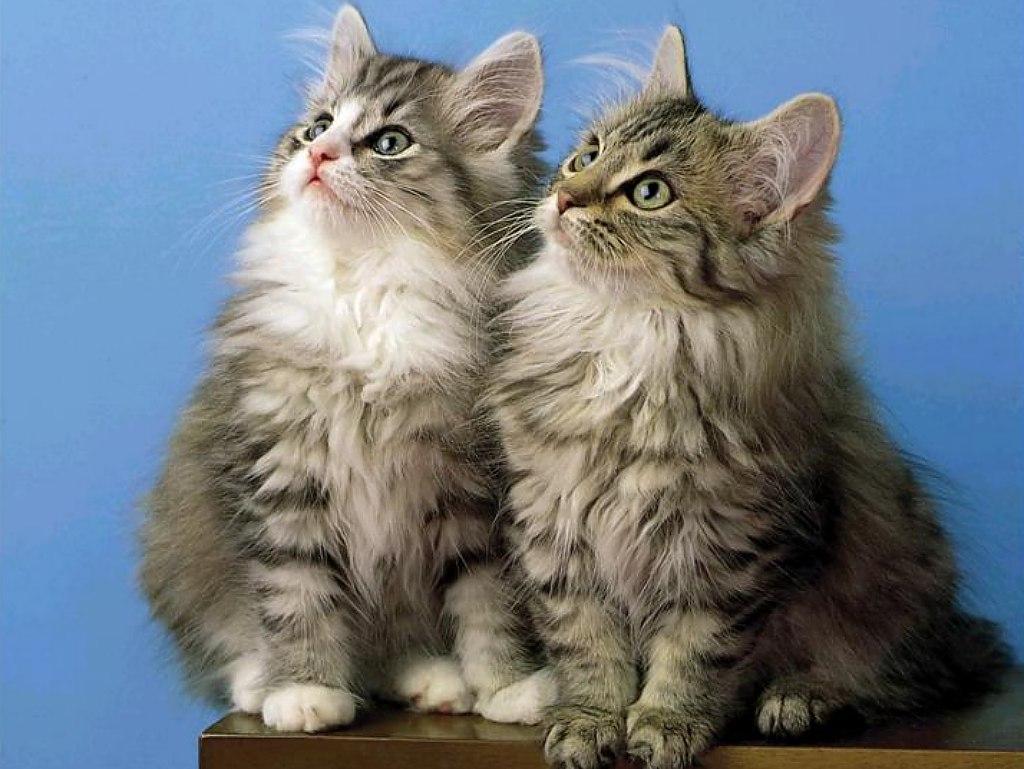 kitties3b - Animal wallpaperz