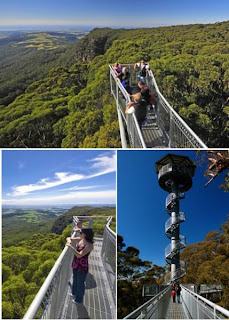 III awara Fly Tree Top Walk (Australia)