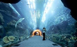 how to fix aquarium leak