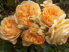 Crown Princess Margarehte Austinros