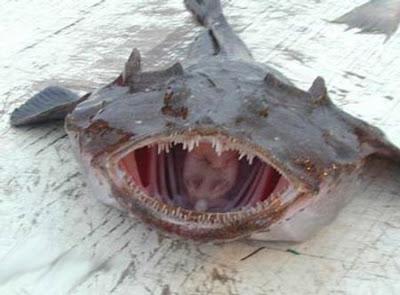 Fortress Australia Outpost: 3 weird fish