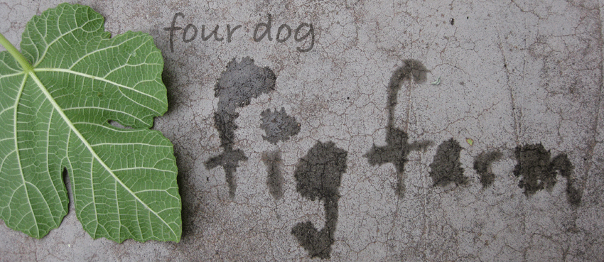 The Four Dog Fig Farm