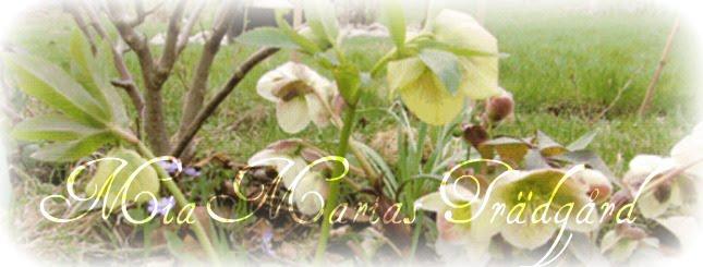 MiaMarias Trädgård