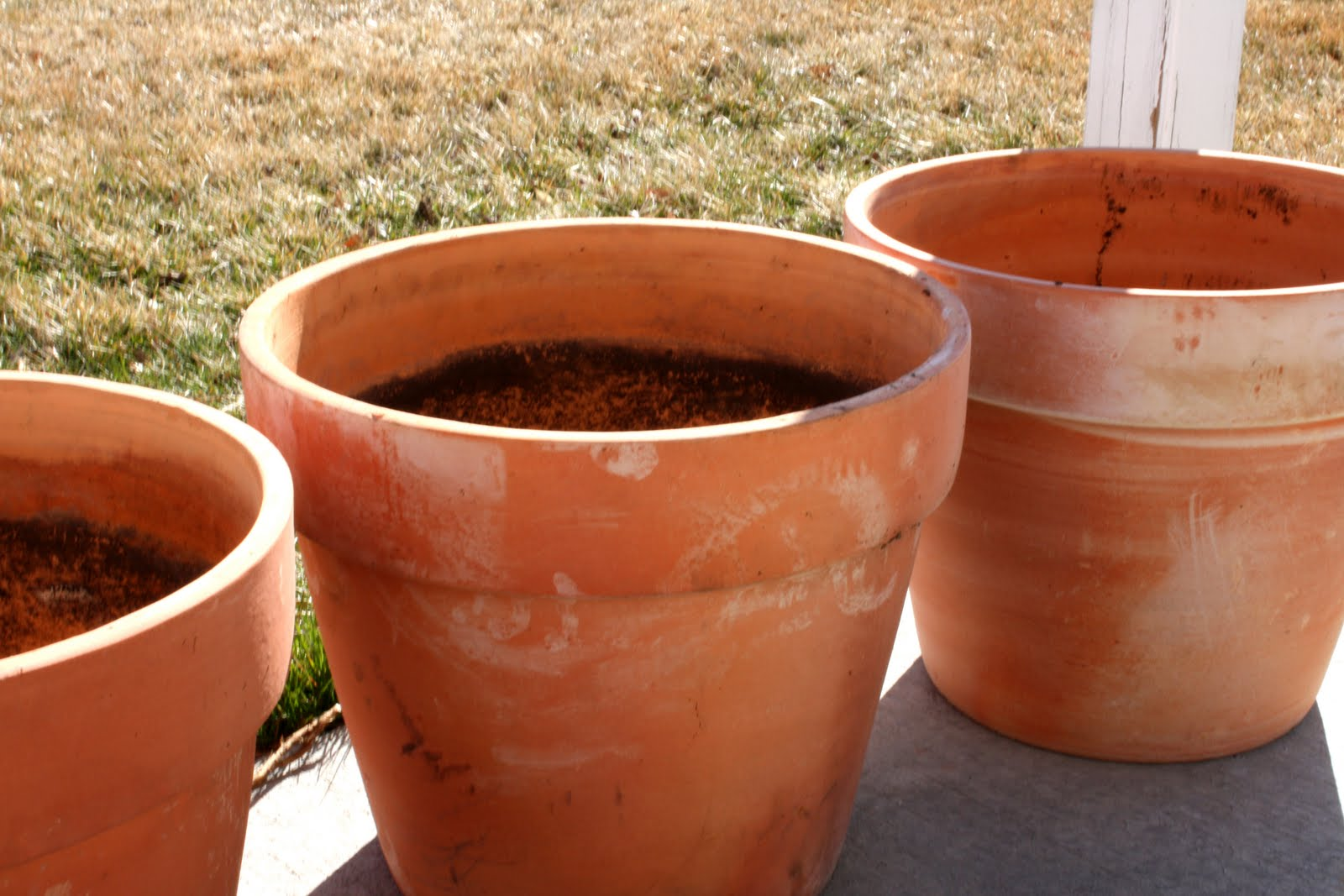 Container Gardening 101   And Planting Peas