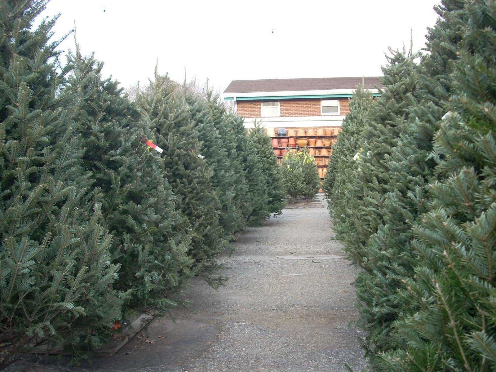 where to buy christmas trees in bergen county - When To Buy Christmas Tree
