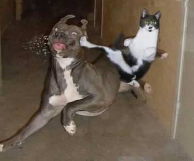 ninja-cat.jpg