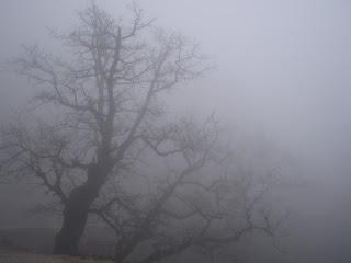 Утренний туман взял в осаду Сибирскую столицу