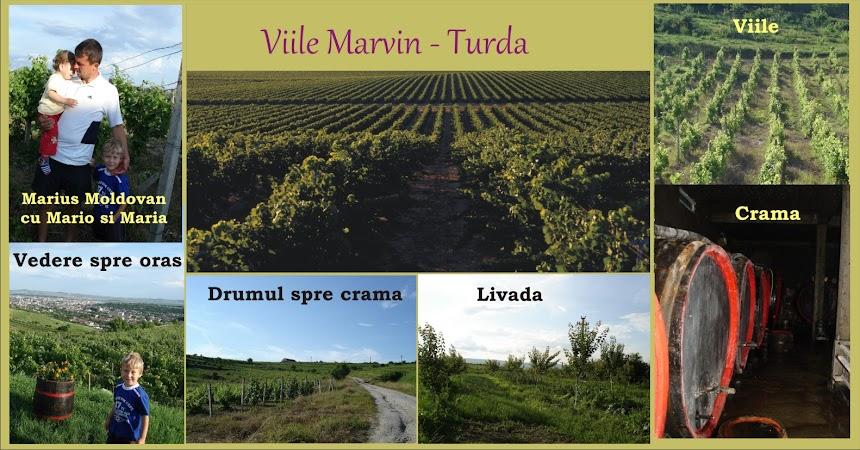 Marvi - Turda