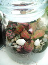 Mini terrarium in a glass jar