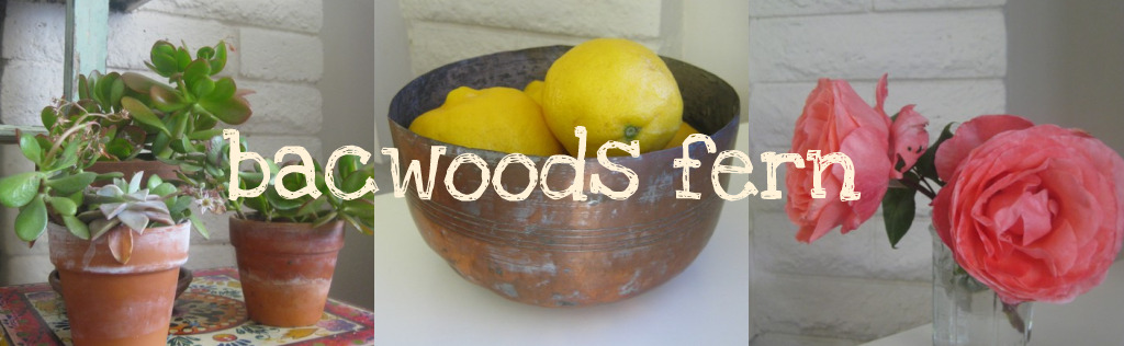 BacWoods Fern