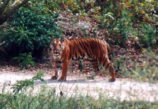 Ranthambore Tiger Tour