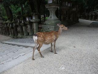 Un ciervo en Nara-koen