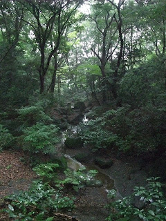 Parece un bosque, pero no lo es