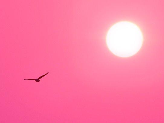 [Cielo+rosa.jpg]
