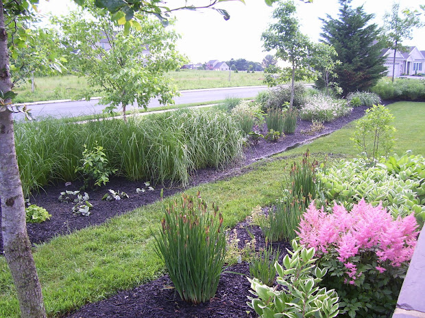 popular landscape plants