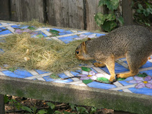 Notchtail and The Mystery Nest of Grass Clippings
