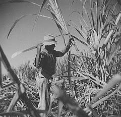 Obrero de la caña cerca de Ponce