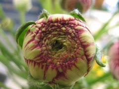 Inspiration från Blomsterfröknarna i Kvissleby