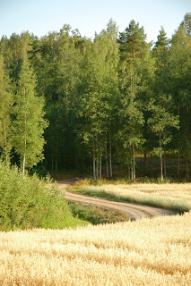 Finland forest barley field