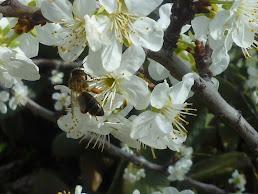 Las flores son la poesía de la primavera