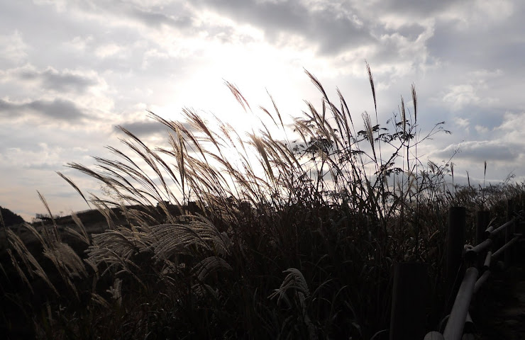 Reeds in the sunset.