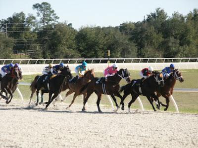 zayat stables